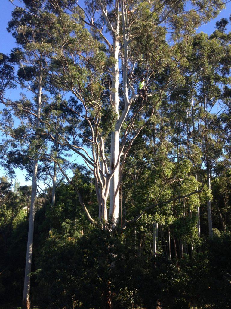 Hazardous Branch Removal