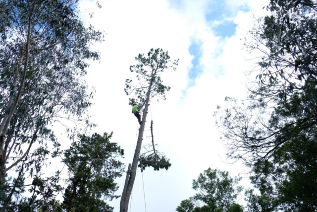 Branch being lowered