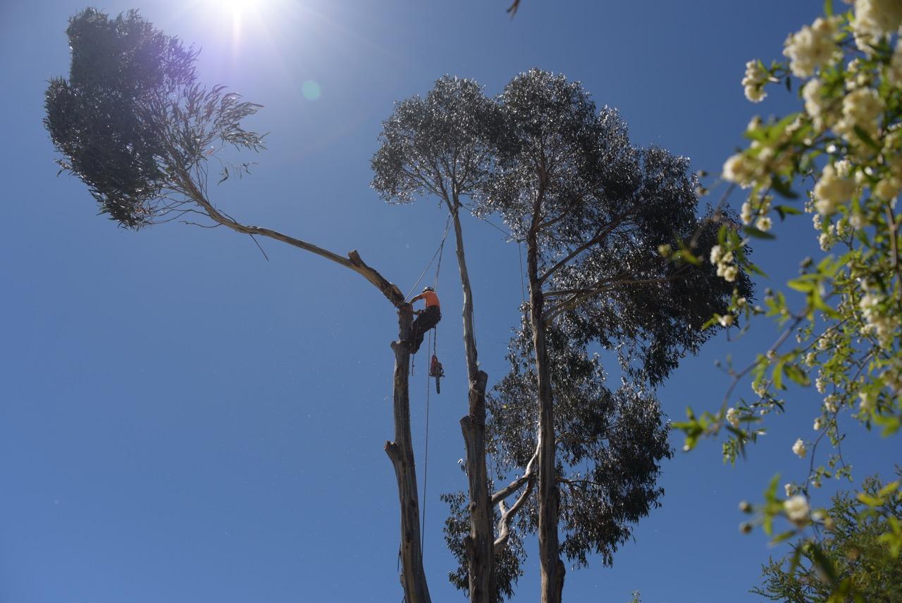 Branch Falling