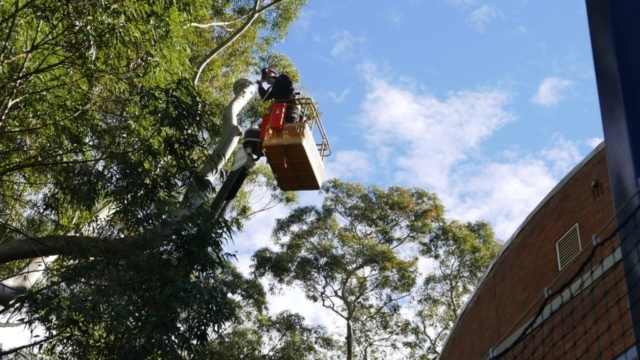 Tree work from a travel tower