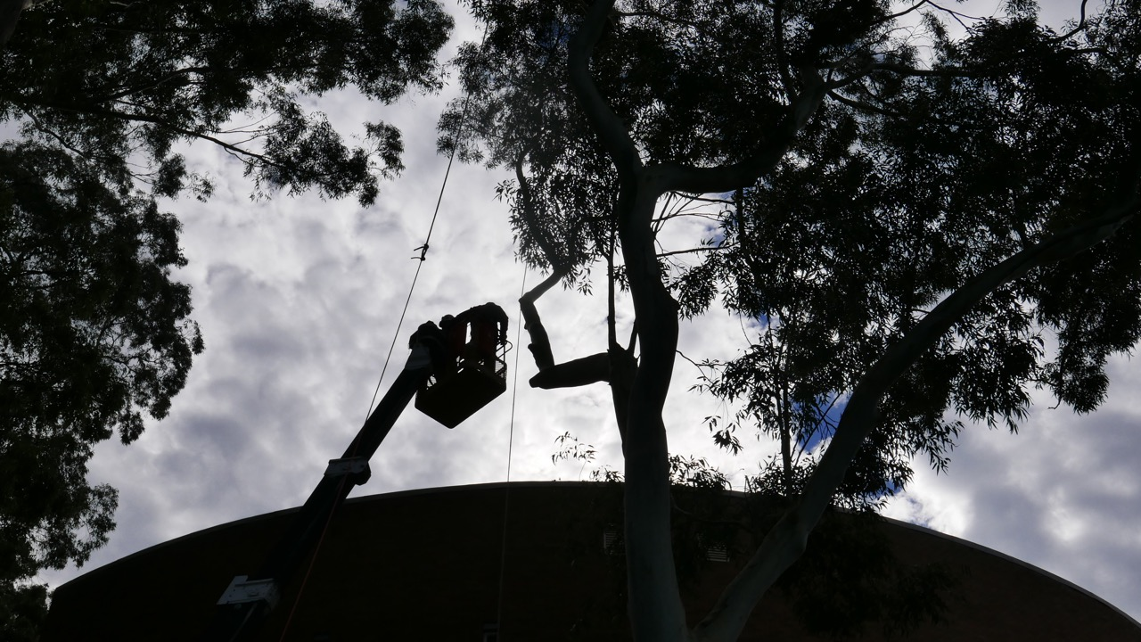 Travel Tower being used to remove branches